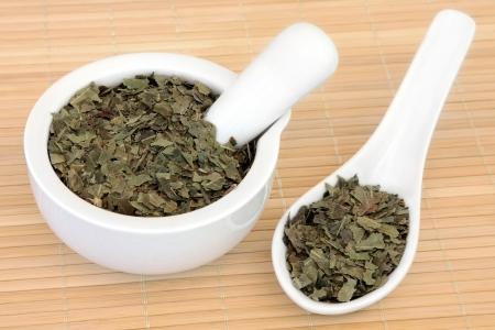 neem: Neem herb leaf used in ayurvedic natural alternative herbal medicine  Azadirachta indica