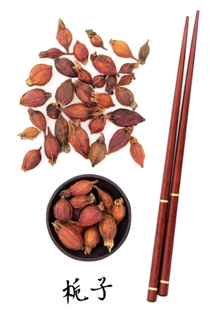 chinese herbal: Gardenia fruit used in traditional chinese herbal medicine with mandarin title script translation and chopsticks  Zhi zi