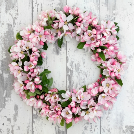 floral wreath: Apple flower blossom wreath over old distressed wooden background