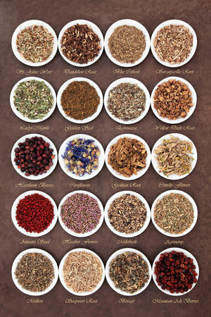 ladys mantle: Medicinal herb selection also used in witches magical potions over brown lokta paper background with titles.