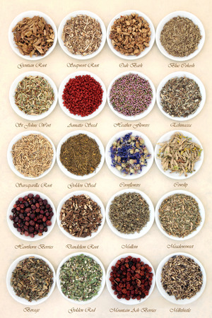 wicca: Medicinal herb selection also used in witches magical potions in white porcelain bowls with titles  over mottled handmade paper background.