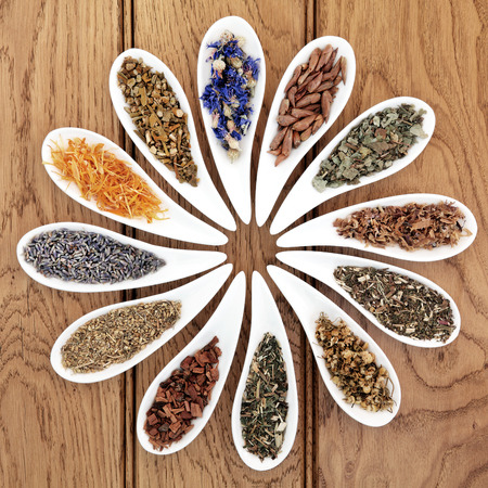 alternative medicine: Medicinal herb selection also used in witches magical potions in white porcelain bowls over oak wood background  Stock Photo