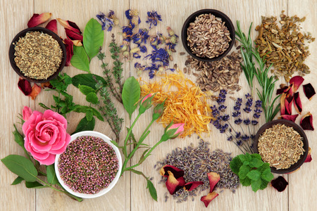 naturopathy: Herbal medicine selection also used in pagan witches magical potions over oak background  Stock Photo