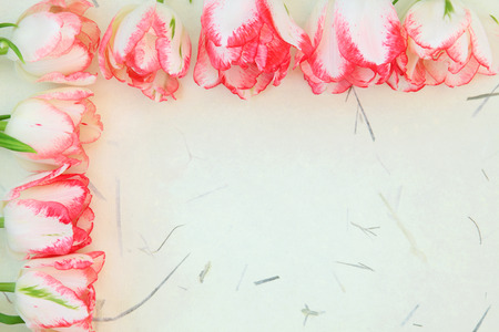Red and cream tulip flowers forming an abstract spring border over handmade mottled paper  photo
