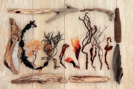 kelp: Driftwood and seaweed abstract design over old oak background