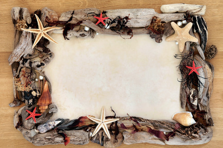 driftwood: Seashell, seaweed and driftwood abstract border over oak wood and paper parchment background