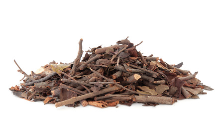 Mulberry gui plante utilisée dans la médecine chinoise sur fond blanc Sang ji sheng
