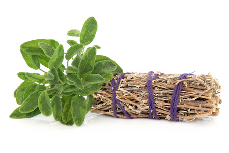 smudge: Smudge stick with fresh sage leaf sprigs over white background