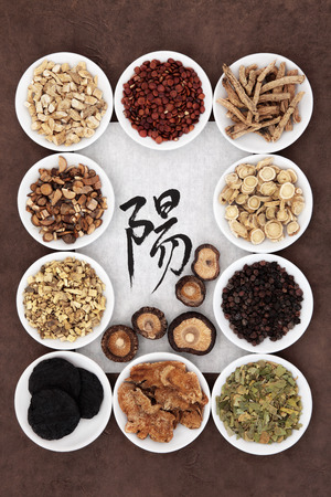 chinese herbs:  Chinese herbal medicine with calligraphy script on rice paper with yang herb selection  Translation reads as yang