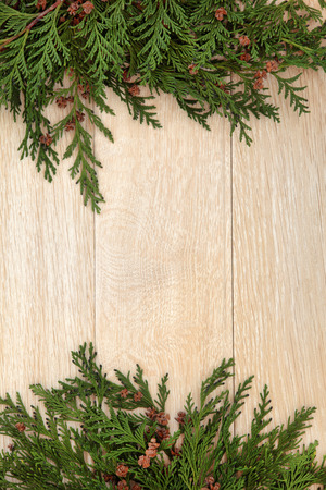 Abstract border of cedar cypress leyland with pine cones over oak background