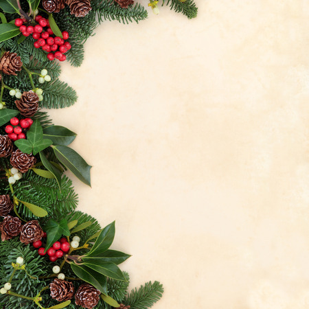 Christmas and winter background border with fir, holly, ivy, mistletoe and pine cones over old parchment paper