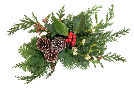 sprigs: Christmas and winter decoration  with holly, mistletoe, fir and cedar leaf sprigs  with pine cones over white background.