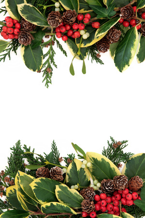 sprigs: Christmas and winter background border with variegated holly, ivy, mistletoe, pine cones and cedar leaf sprigs over white with copy space.