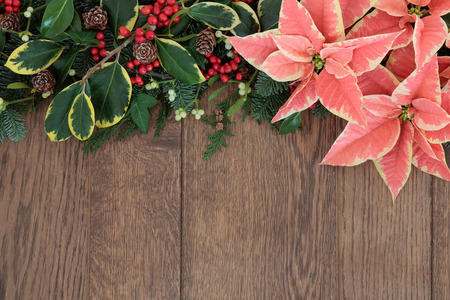 Pink poinsettia flower background border with christmas holly, mistletoe and winter greenery over old oak. photo
