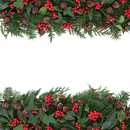 Winter and christmas floral background border with holly, ivy, mistletoe, spruce fir and pine cones over white.
