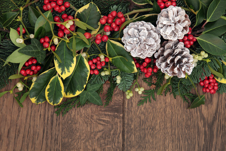 Christmas and winter background border with snow covered pine cones, holly, mistletoe, ivy, fir and cedar cypress over old oak. photo