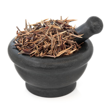 locust: Chinese honey locust herb used in herbal medicine in a marble mortar with pestle over white background. Zao jiao ci.
