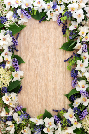 philadelphus: Lavender, elderflower, ceanothus, ladys mantle and philadelphus mock orange flower border over light oak background.