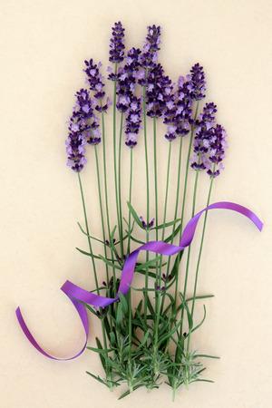 flor morada: Flores de lavanda hierba con cinta p�rpura sobre fondo crema moteado. Lavandula angustifolia.