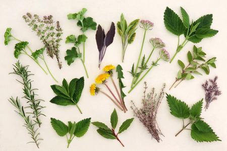 Herb leaf and flower selection for medicinal and culinary use over mottled cream background.