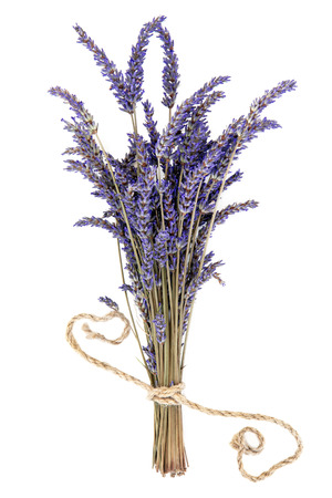 lavandula angustifolia: Lavender herb flower bunch over white background. Lavandula angustifolia.