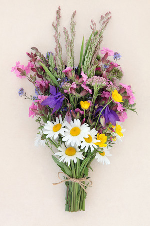 ox eye: Summer wild flower posy over mottled cream background.