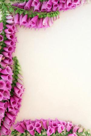 purpurea: Foxglove flower border over mottled cream background. Digitalis purpurea.