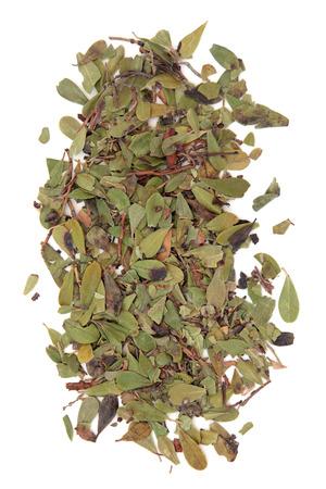 uva: Uva ursi herb leaf sprigs over white background. Arctostaphylos.