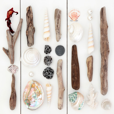 driftwood: Driftwood and sea shell abstract design on wooden white background. Stock Photo