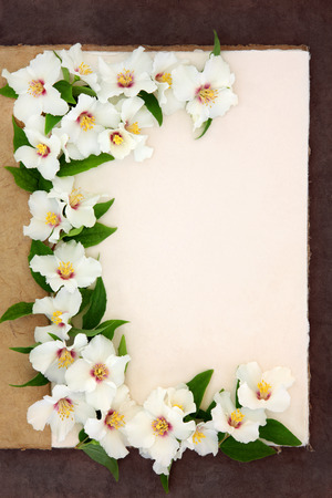 philadelphus: Philadelphus mock orange flower border on a natural hemp notebook over brown paper background. Belle etoile. Stock Photo
