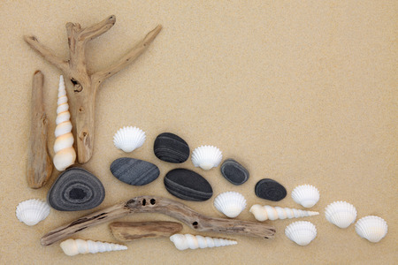 seashell: Seashell pebble and driftwood abstract collage on beach sand background.