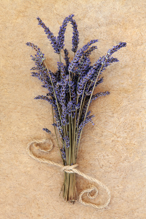 lavandula angustifolia: Lavender herb flower bunch over speckled handmade paper background. Lavandula angustifolia.