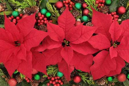 Poinsettia flower background with bauble decorations, holly, mistletoe and winter greenery. Archivio Fotografico