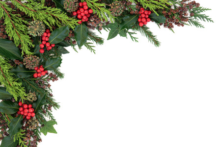 christmas ivy: Winter and christmas abstract background border with holly, ivy, fir and cedar cypress over white. Stock Photo