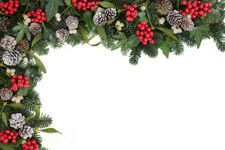 christmas ivy: Christmas and winter background border with holly, ivy, mistletoe, blue spruce fir and pine cones over white.