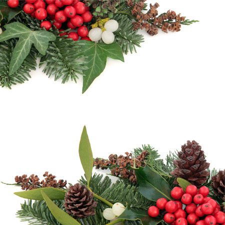 ivy: Christmas and winter background border with holly, mistletoe ivy, spruce fir, pine cones and cedar cypress over white background. Stock Photo