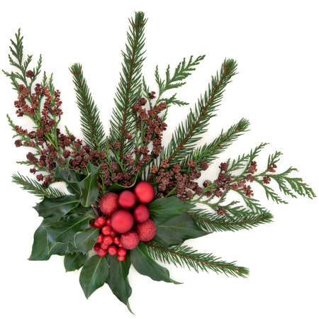 christmas ivy: Christmas flora with red baubles, holly, ivy, fir and winter greenery over white background.