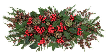 christmas ivy: Christmas and winter flora with holly, ivy, fir and cedar cypress over white background.