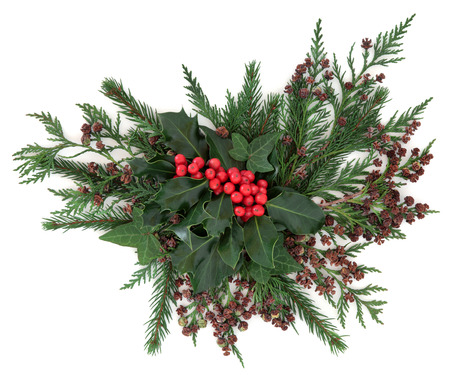 christmas display: Christmas and winter flora with holly and red berries, ivy, fir and cedar cypress over white background. Stock Photo