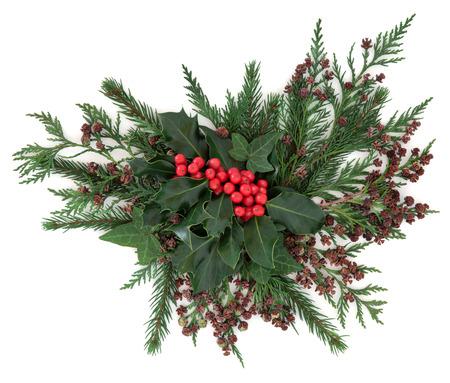 houx: No�l et la flore de l'hiver avec le houx et de baies rouges, de lierre, de sapin et de c�dre de cypr�s sur fond blanc. Banque d'images