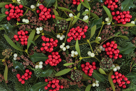 fir cones: Christmas abstract background with holly, ivy, mistletoe, blue spruce fir and cedar cypress greenery.