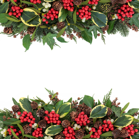 christmas ivy: Christmas and winter background with variegated holly, mistletoe, ivy, pine cones and traditional greenery over white.