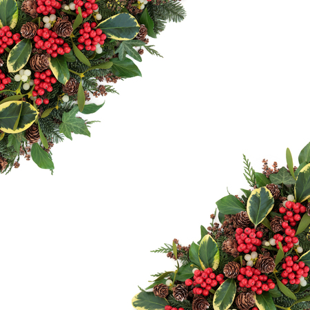 christmas ivy: Christmas and winter flora with variegated holly, mistletoe, ivy, pine cones and traditional greenery over white background.