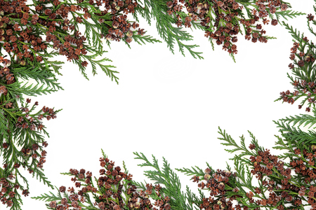 Cedar cypress  abstract border with pine cones over white background. Banco de Imagens - 46145689
