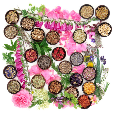 valerian: Medicinal flower and herb selection of summer used in alternative herbal medicine over white background.
