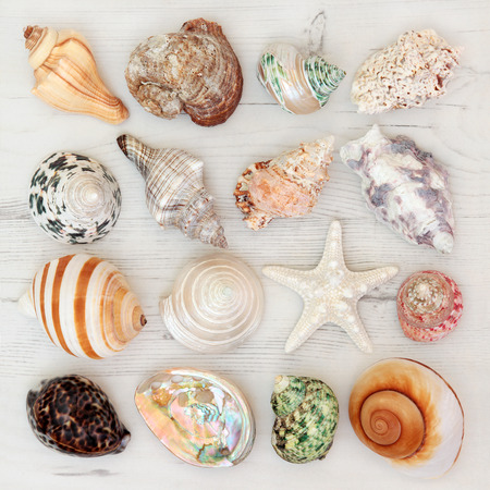 shell: Sea shell selection on a distressed wooden background. Stock Photo