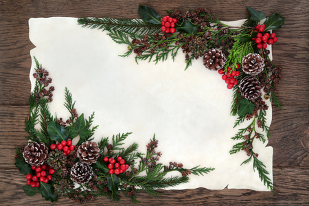 red oak tree: Winter and christmas background border with holly, ivy, pine cones, cedar cypress and fir on parchment paper over old oak wood.