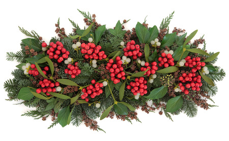winter trees: Christmas holly and mistletoe floral display with winter greenery of blue spruce and cedar cypress leyland over white background.