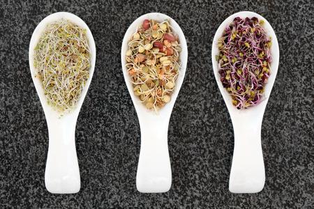 健康食品中国はらもやし、豆、アルファルファ ブロッコリーとランボーを混合の大理石の背景に磁器スクープで大根。 写真素材 - 46640035