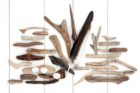 beauty in nature: Abstract nature background of driftwood, cockle shells and magpie feather over white wood.